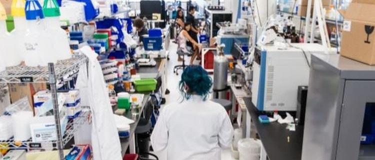 SBIR-STTR-Success: Ginkgo Bioworks